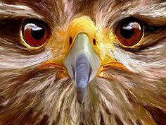 Wildlife Close Ups - Voting Ends / Prizes Awarded:Saturday, December 13th, 2014 - 3:21 AM -  Fine Art America