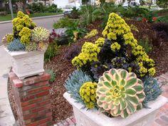 stunning plant combination