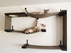 Sissi , The Red Cat: How to build a wall-mounted cat tree