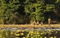 Time + Tide combines the prestigious Norman Carr Safaris, Miavana, Chongwe Safaris and more holiday destinations to suit the discerning traveller. Time And Tide, Okavango Delta, Travel Companies, African Safari, Rest Of The World, Travel Planner, Dolores Park, National Parks, Wildlife