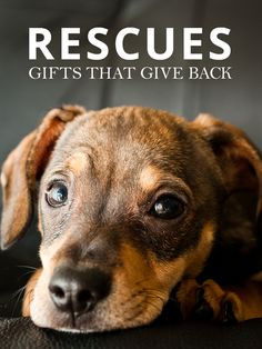 Holiday Gifts that Give Back--Give back to the animal community this holiday season!  #animalrescues #holidaygiving