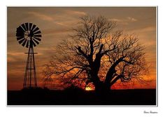 Windmill and tree Old Windmills, Corrugated Metal, Beautiful Sunrise, Old Barns, Beautiful Places, Scenery, Country Roads, Drawings, Nature