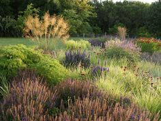 Private garden in West Cork, Ireland - designed by Piet Oudolf. Sage, Echinacea, and grasses.