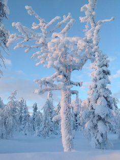 Lumipuu Levillä