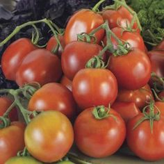 Heinz 2653 Organic Tomato Perfect, short season Large yields of oz shaped ripen early and at the same time. The fruit are with very little juice, perfect for sauce and Zucchini, Rinder Steak, Compost Tea, Bush Beans, Organic Seeds, Bulb Flowers, Organic Vegetables, Sprouts, Plant Based