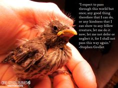 14 Quotes Every Animal Advocate Should Know By Heart | One Green Planet