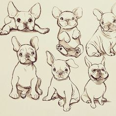French bulldogs 💖 #frenchbulldog #frenchie #art #drawing #sketch #dogs