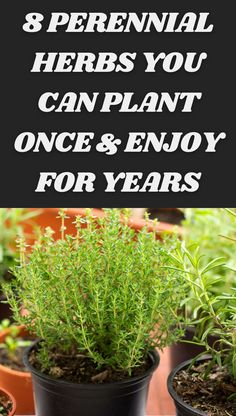Gardening For Beginners, Gardening Tips, Kitchen Gardening, Jungle Gardens, Farm Gardens, Garden Projects, Projects To Try, Freezing Fresh Herbs, Small Herb Gardens
