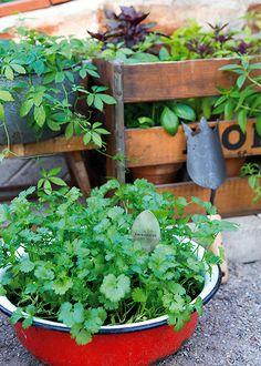 Honeycomb, Farmer, Home And Garden, Design Inspiration, Herbs, Plants, Beautiful, Ideas, Honeycombs