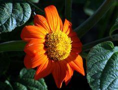 7035-167 Wonderful flower 鲜花 花 꽃