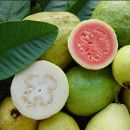 Propiedades nutricionales de la Guayaba ecoagricultor.com