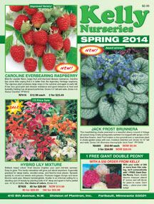 """Container Plants - Fruiting\"""" - Direct Gardening Product Search"""