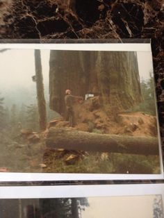 Mike Gravelle‎Old Logging Pictures  Bill Gravelle and Fred kerton, Powell River 1980's 19x20ft red cedar