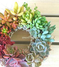 グラデーションが素敵な多肉リース。こんなカラフルな多肉リースを玄関先に飾っておけば、出掛ける時も帰宅した時も楽しい気持ちになれそうですね。 Succulent Bowls, Succulent Wreath, Succulent Arrangements, Succulents In Containers, Planting Succulents, Planting Flowers, Love Garden, Botanical Gardens, Decor Crafts