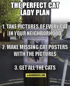 The perfect cat lady plan: 1. Take pictures of every cat in your neighborhood. 2. Make missing cat posters with the pictures. 3. Get all the cats. Funny cat humor.