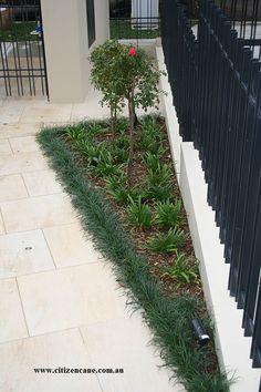 Image result for mondo grass border Grasses, Sidewalk, Landscape, Garden, Image, Lawn, Grass, Lawn And Garden, Sidewalks