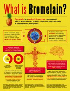 #Bromelain is a proteolytic enzyme – an enzyme which breaks down protein – that is found naturally in the stems of pineapples.   Infographics: http://www.isotonicsupplementstore.com/what-is-bromelain/