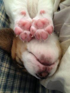 Pink puppy paw pads...precious!