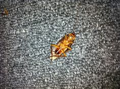 Roach found on 07/01/2013. Twitching!