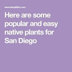 Here are some popular and easy native plants for San Diego