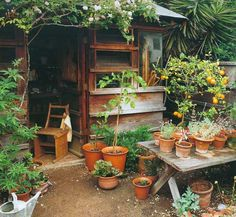 I want a garden, a shed, many pots, and loads of plants around it - just like this Dream Garden, Home And Garden, Porch Garden, Magic Places, My Secret Garden, Garden Structures, Garden Spaces, Garden Inspiration, Container Gardening