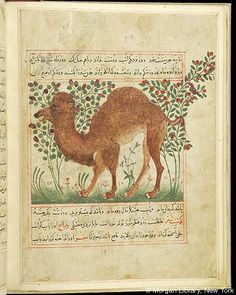 Bestiary, Camel; in background, birds in flowering trees. - The Morgan Library & Museum
