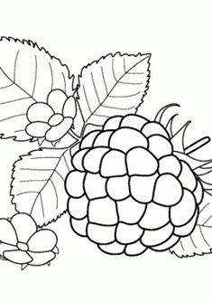 Avocados Fruits Coloring Pages For Kids Printable Free
