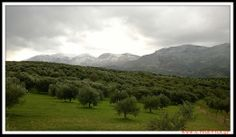 The first snow of the season  fell :)  #Crete 10th #December 2013 #photo
