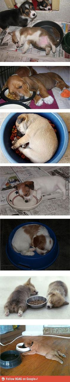 Establishing a puppy's eating routine can be exhausting! A regular schedule will help your dog w/ the potty training process. (via 9gag)