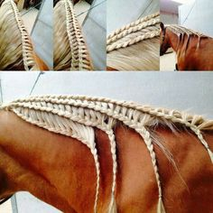 Cool horse mane braids for those of you who have lots of patience, lol, and a patient horse. Cute Horses, Pretty Horses, Horse Love, Beautiful Horses, Horse Mane Braids, Horse Hair Braiding, Foto Cowgirl, Horse Clipping, Horse Tail