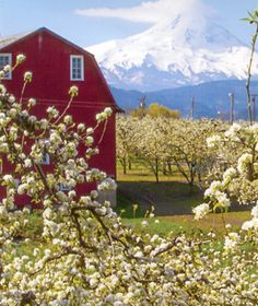 Hood River Fruit Loop | Breweries, hiking, and orchards galore just outside the city. As for the name? Pick your own fruit while driving the loop in the summer. | #bhldnportland Hood River Fruit Loop, Beautiful World, Beautiful Places, Hood River Oregon, Pretty Pictures, Pretty Pics, Oregon Trail, Us Road Trip, Columbia River Gorge