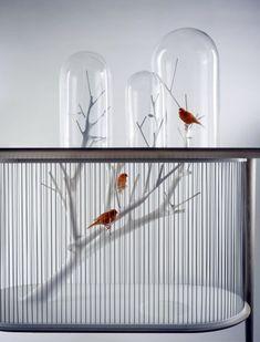 Haustiere - Bird Cage Bird of Archi Grégoire de Lafforest