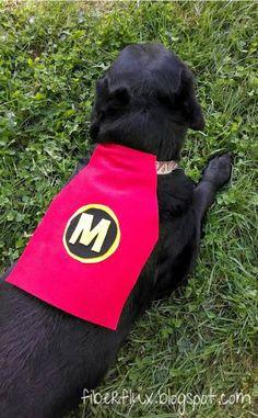 Make a Superhero Doggie Cape! (No-Sew)