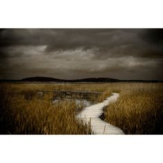 "Landscape Photography Nature Series 8x10"" Fine Art Photograph... ($84) ❤ liked on Polyvore featuring home, home decor, wall art, photo wall art, island wall art, plum wall art and island home decor"