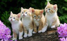 fondos de escritorio de gatitos - Buscar con Google