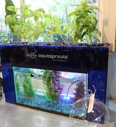 AquaSprouts™ Self-Cleaning Aquaponics Garden Aquarium | Great way to start small by growing your sustainable garden indoors.