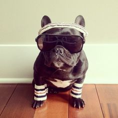 when I get my frenchie I will dress him up lol