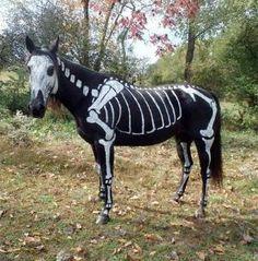 Halloween Horse by consuelo