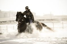 Horse photography blue roan photography snow