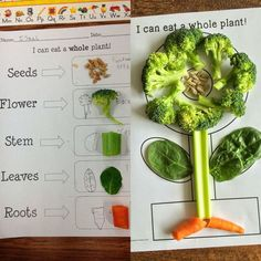 Plant activities for kindergarten, preschool, first grade, elementary science