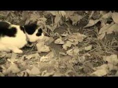 vidio kucing menangkap tikus dengan jurus kunfu