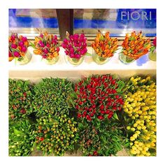 Our store, where spring lives all year long!. Tulips in January