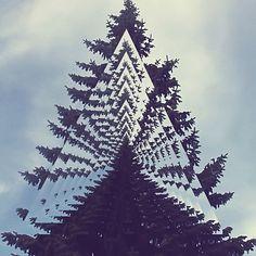 ▲ trees / Sacred Geometry <3