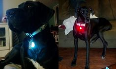 for dogs who like to hide...  Spotlit L.E.D Collar Light