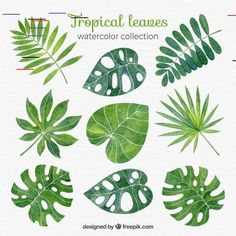 Tropical leaves collection in watercolor style Free Vector Watercolor Plants, Watercolor Leaves, Watercolor Paintings, Tropical Leaves, Tropical Plants, Tropical Flowers, Plant Art, Leaf Art, Botanical Illustration