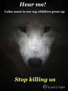 Stop killing the wolves. Wish I could save you all beautiful friends