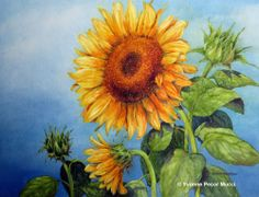 Sunflowers Watercolor by Yvonne Pecor Mucci