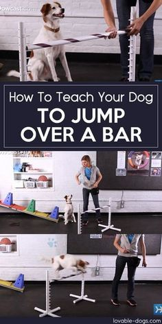 Useful Dog Obedience Training Tips – Dog Training Love My Dog, Training Your Puppy, Dog Training Tips, Dog Agility Training, Training Schedule, Training Videos, Training Plan, Dog Minding, Easiest Dogs To Train