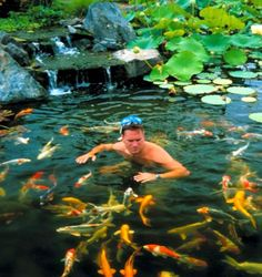 backyard ponds make fish keeping fun, outdoor living, ponds water features, Swimming with the fishes