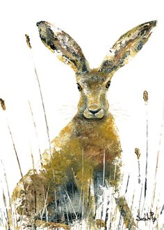 All Ears - Sarah Pye Green pebble cards